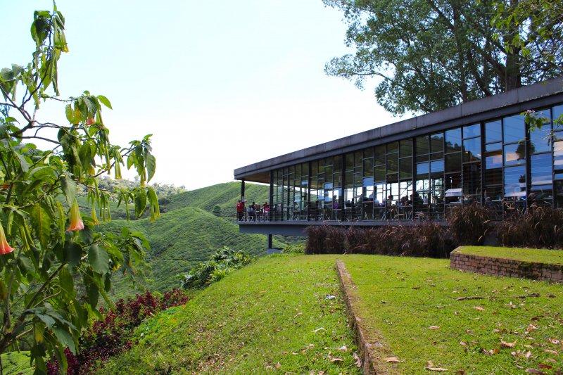 スンガイパラスティーガーデン(Sungai Palas Tea Garden)